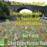 Beauty on a budget - new approaches to successful urban meadows