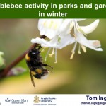 Bumblebee activity in parks and gardens in winter