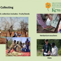 An introduction to the basic principles of seed collecting and storage
