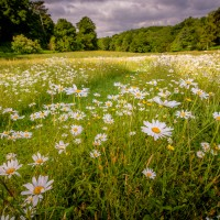 Booking now open for Wildflower meadow conservation training day