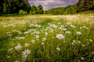Meadow feature at Wakehurst Place 23/06/15 Picture by Jim Holden