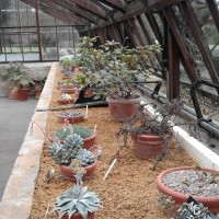 Booking now open  for Glasshouse cultivation; rationalising and connecting collections training day
