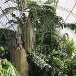 Growing and Displaying Tropical Plants