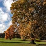 Tree Health & Plant Biosecurity Action Plan