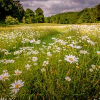The restoration and integration of natural habitats in a designed landscape