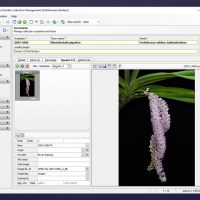 Managing Digital Assets in  Botanical collections: capturing, storing and sharing data