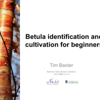 Betula Identification & Cultivation