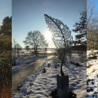 Creating a winter garden with a difference
