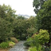 BOOKING OPEN: Arboreta and Woodlands - Tree Forum at RHS Garden Rosemoor