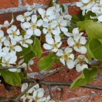 This gardener's journey through horticulture: Part 2