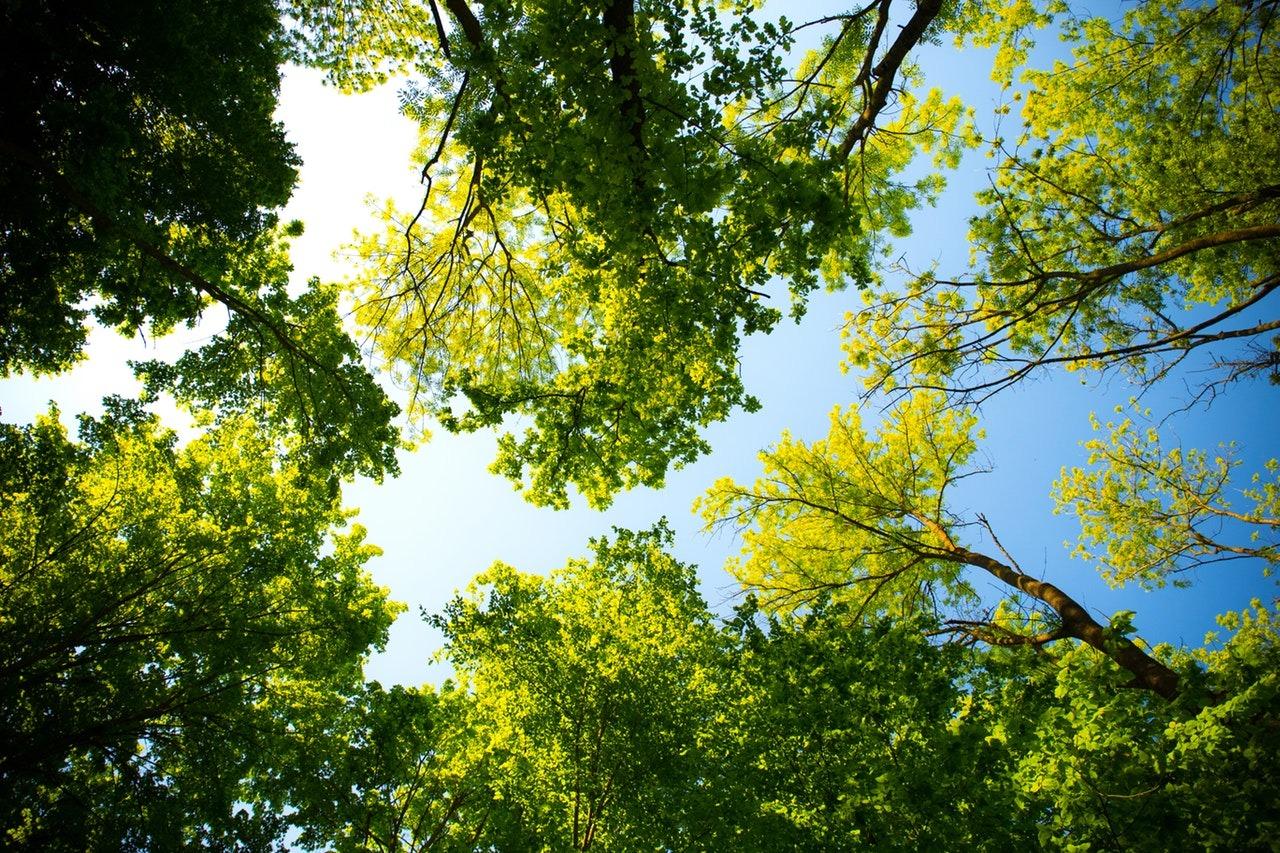 Trees and Development – Tree Forum at Royal Botanic Garden Edinburgh