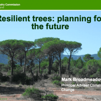 Resilient trees: planning for the future